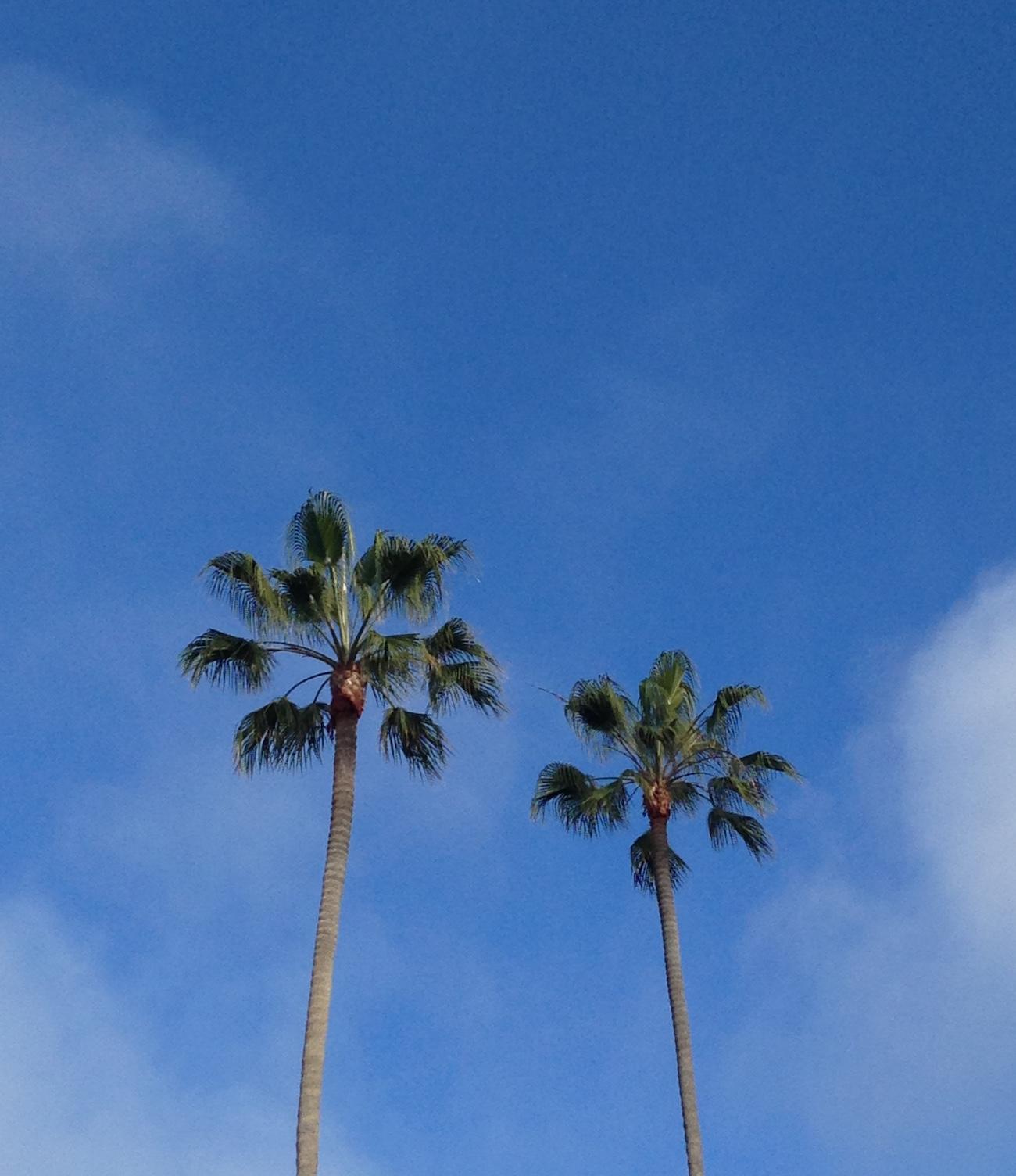 san diego trees